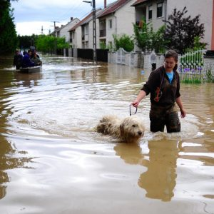 floods-dog-walking_1638833i